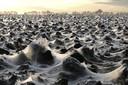 Ruim vijf jaar geleden koloniseerden hangmatspinnetjes een akker bij Kwadendamme