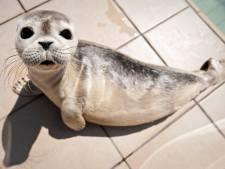 Zeehondenakkoord bereikt: opvang zieke dieren alleen bij menselijk toedoen