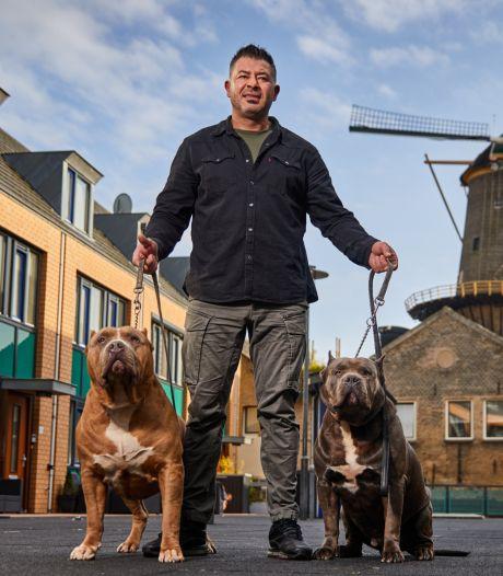 Rasit maakt furore met zijn enorme pitbullachtige honden: 'Ze willen alleen maar knuffelen'