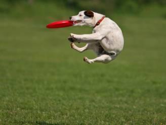 Hoe kan je veilig sporten met je hond?