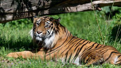 Massa-extinctie versnelt: 500 dieren dreigen komende 15 jaar uit te sterven