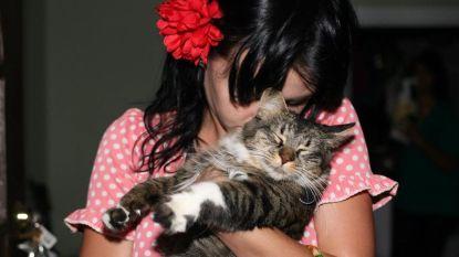 Katy Perry rouwt om het verlies van haar kat Kitty Purry