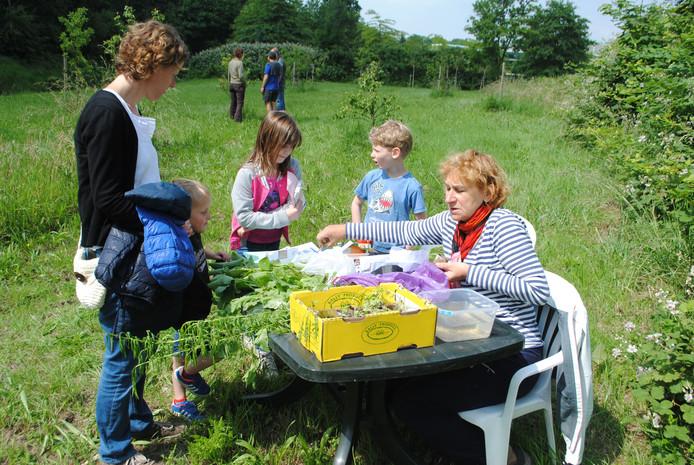 Buurtbewoners, jong en oud, konden zondag in de pluktuin stekjes en zaadjes krijgen om in hun eigen tuin groenten te kweken. Op de achtergrond enkele van de fruitbomen.