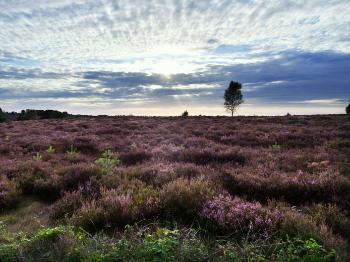 De Stichting Platform Duurzaam Hellendoorn wil de activiteiten op de Sallandse Heuvelrug beperken, zolang onduidelijk is of deze schadelijk zijn voor de flora en fauna in het gebied.