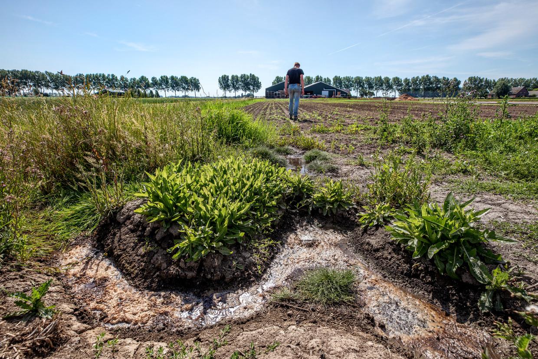Timo Steenwijk runt samen met zijn familie een kwekerij in Abbenes. Op zijn akker borrelt zilt water op.