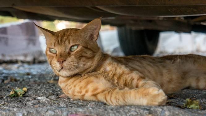 Petitie voor gelijke rechten katten