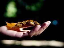 Geen compensatie voor weghalen bomen op Markt Waalre