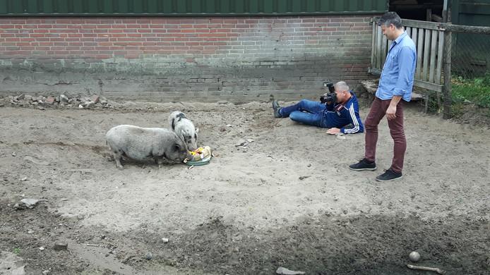 Lambère van de Ven trakteerde zijn varkentjes op een Werelddierendagtaart.
