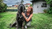 """Prijshond Nembo verliest stuk oor na aanval andere hond: """"Wat als dit met een kind was gebeurd?"""""""