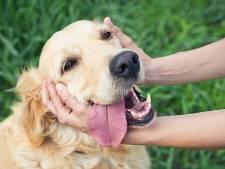 Hond ontvoerd na conflict in Sint-Oedenrode