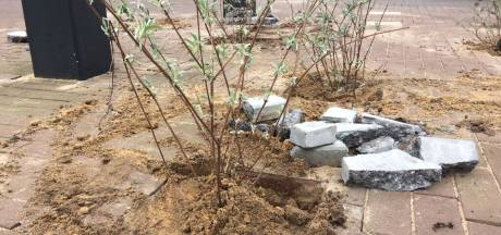 Basisscholen in Midden-Delfland verruilen pleintegels voor planten