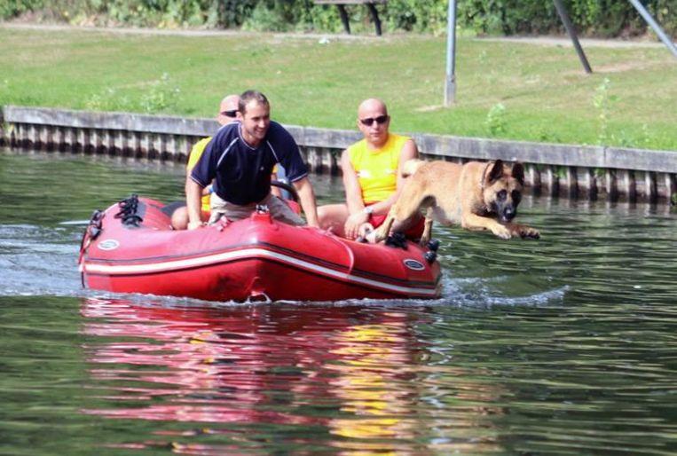 De hond duikt gezwind het verfrissende water in.