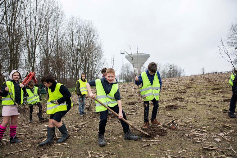 Vijftig kinderen van de lagere school Het Beukenbroekje uit Rosmeer planten tweeduizend bomen aan Het Broek.