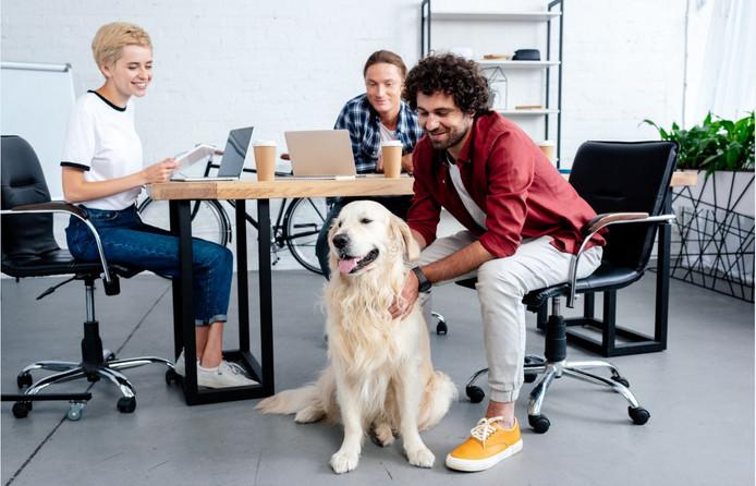 Foto ter illustratie. Van de werknemers onder de 30 jaar zegt 22 procent wel wat te zien in een kantoorhond om stress te helpen verminderen.