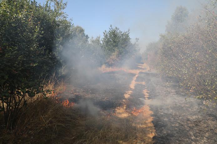 Een stuk bos dat in brand stond op de Loonse en Drunense Duinen.
