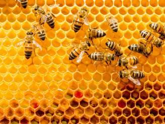 Federale ministers willen bijensterfte aanpakken