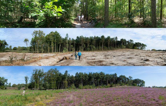 Het gebied tussen het Kersjesven en het Eendenven vóór, vlak na (boven), en zes jaar ná de bomenkap (onder).