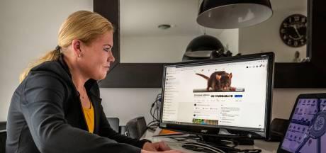 Overlast ratten in Veldhoven nog niet voorbij: 'Het worden er eerder meer dan minder'