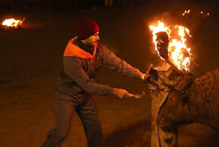 Uiteindelijk wordt de stier losgelaten en probeert hij het vuur op alle mogelijke manieren te blussen.