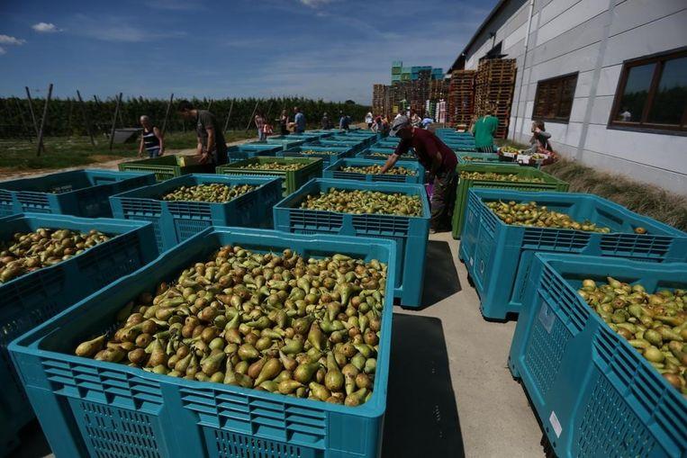 Op de weggeefdag werd  50.000 kilo fruit gratis weggeven.