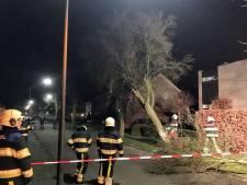 Vrachtwagenchauffeur rijdt boom omver in Veghel