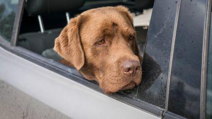 Man ontvoert hond van buren en laat hem achter in Frankrijk