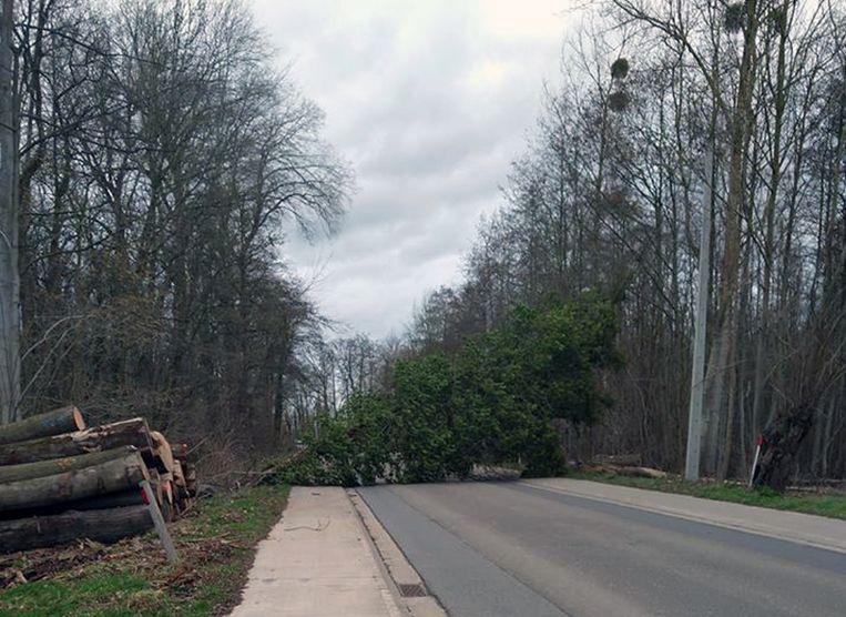 In Meerbeek, deelgemeente van Kortenberg, kwam een boom over de weg terecht in de Wijnegemhofstraat. De weg is er afgesloten tot maandagochtend.