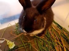 'Zwart plastic tasje' blijkt konijn: politie Elburg zoekt baasje