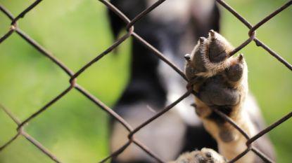 Wijkagent ontdekt zwaar verwaarloosde dieren tijdens huiscontrole in Leuven