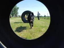 Omstreden Hondenspeelparadijs Bunnik mag blijven