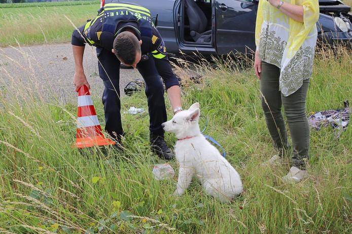 De puppy van de bestuurster kwam met de schrik vrij na het ongeval.