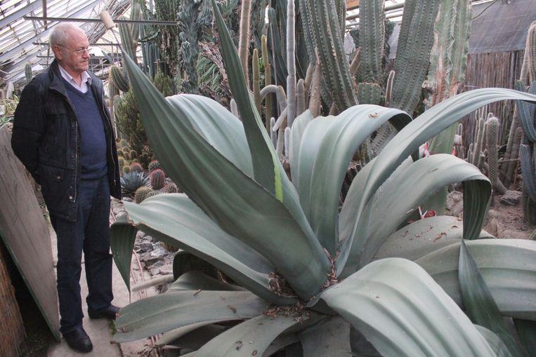 Jef Keymeulen in de serre van de cactusclub.