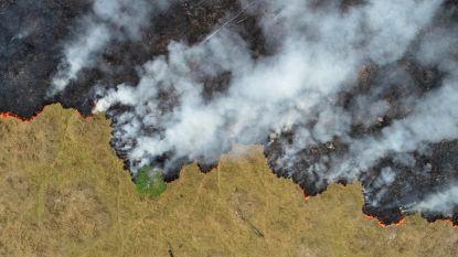 Dit jaar al 83 procent meer Amazonewoud gerooid dan in 2018