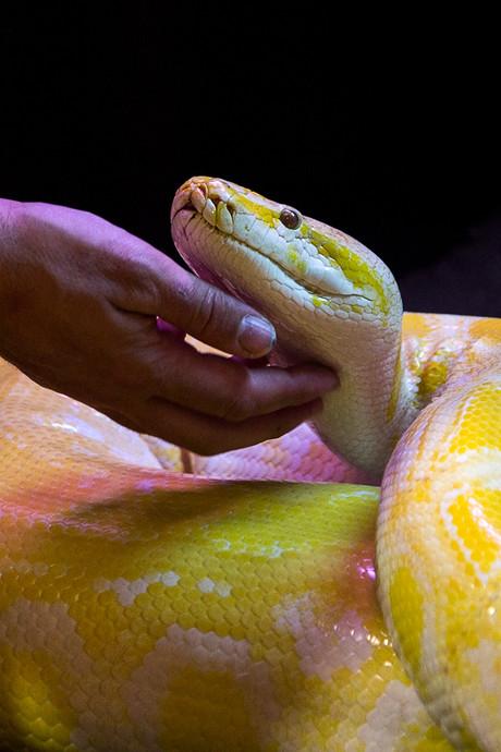Bekende Franse slangentrainer overleden na slangenbeten