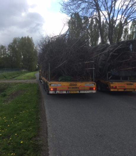 Waterleiding over het hoofd gezien in Bemmel: planten eikenbomen afgeblazen