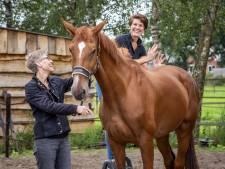 Paarden zijn meesters in het verhullen van hun blessures maar deze Deventerse paardenmasseur leert je daar doorheen 'te voelen'