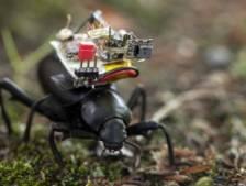 Cette caméra minuscule donne un aperçu de la vie d'un insecte