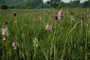 Het Stelkampsveld bij Borculo behoort tot de toptien van belangrijkste natuurgebieden voor planten in Nederland. Foto Jos Korenromp