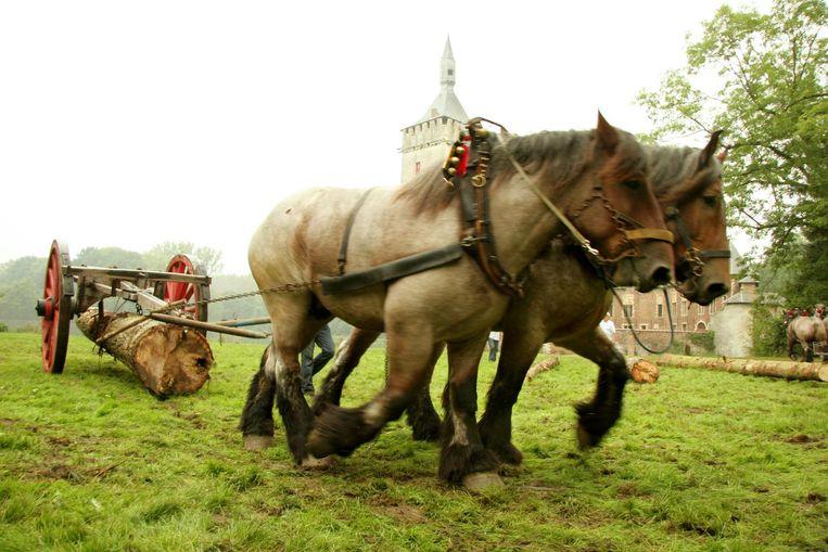 Je kan het zo gek niet bedenken, of er bestaat een Belgisch kampioenschap van. Zo ook van boomslepen met trekpaarden.