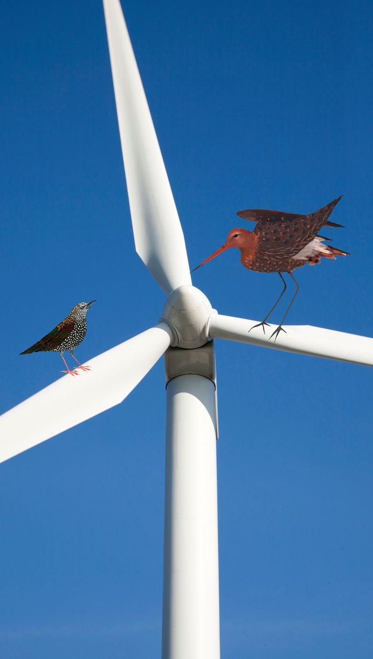 Vogeltjes op een windmolen.  Beeld RV