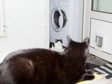 Katten in therapie, maar het baasje moet het doen