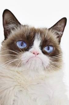 Grumpy Cat est mort