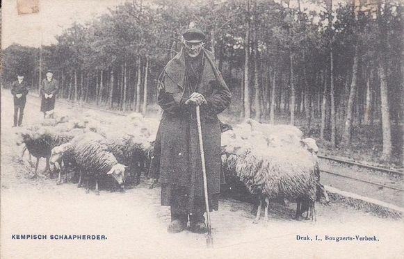 De Vorselaarse schaapherder 'Sjarel van Toeëre'
