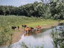 Ons 'vlees' graast op giftige grond: 'Je neemt daarmee wel bewust een risico'