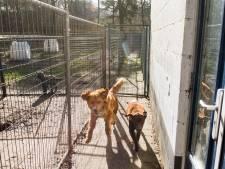 Minder honden in asiel Harderwijk; extra geld wordt nog gezocht