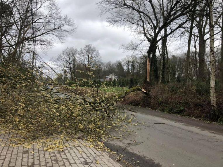 boom op weg stuurstraat