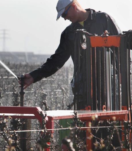 Fruittelers krijgen toch geld van provincie als mezen fruit vernielen
