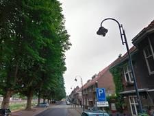 Ook Stichting Boom en Bosch woedend over geplande snoei kastanjes