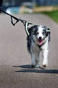 Honden en hun baasjes moeten zondag zien te overleven