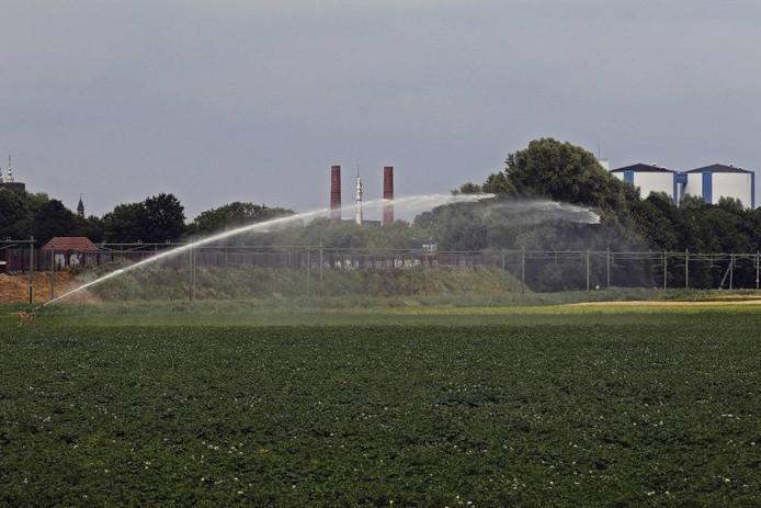 Onder meer in Zevenbergen beregenen landbouwers hun gewassen. Foto Gerard van Offeren/Pixs4Profs